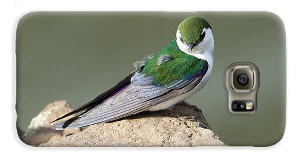 Violet-green Swallow Galaxy S6 Case by Mike Dawson