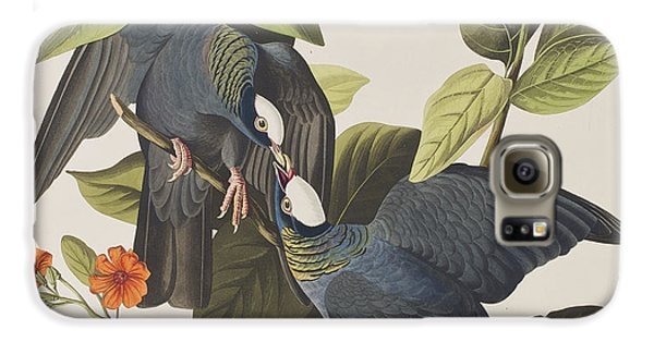 White Crowned Pigeon Galaxy S6 Case by John James Audubon