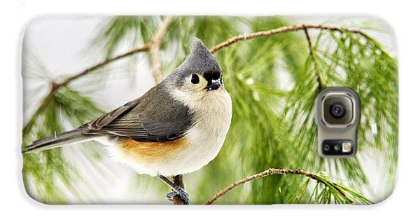 Winter Pine Bird Galaxy S6 Case by Christina Rollo