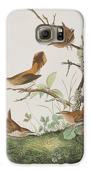 Winter Wren Or Rock Wren Galaxy S6 Case by John James Audubon