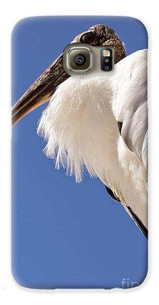 Wonderful Wood Stork Galaxy S6 Case by Carol Groenen