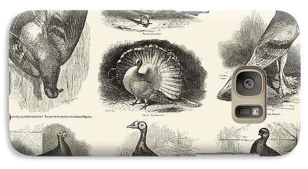 1868 Darwin Pigeon Breeds Illustration Galaxy Case by Paul D Stewart