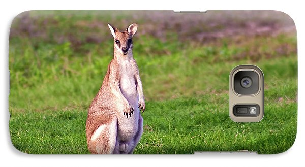 A Male Grey Kangaroos (macropus Galaxy Case by Miva Stock
