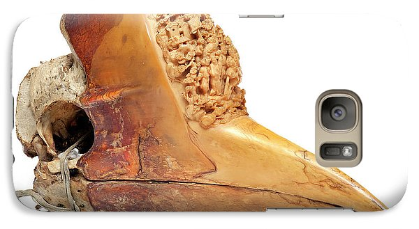 Carved Hornbill Skull Galaxy S7 Case by Natural History Museum, London