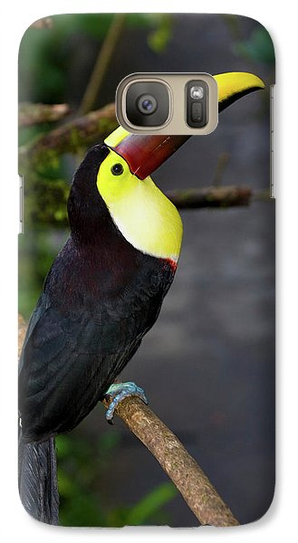 Chestnut-mandibled Toucan, Ramphastos Galaxy S7 Case by Thomas Wiewandt