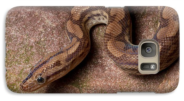 Galaxy Case featuring the photograph Colombian Rainbow Boa Epicrates Maurus by David Kenny