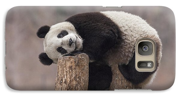 Giant Panda Cub Wolong National Nature Galaxy S7 Case by Katherine Feng