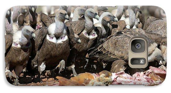 Griffon Vultures Feeding Galaxy S7 Case by Nicolas Reusens