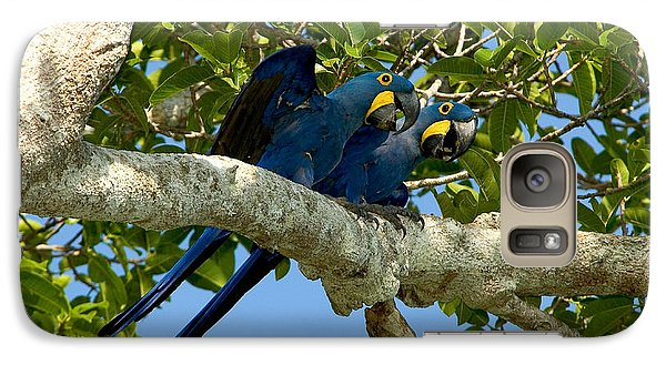Hyacinth Macaws, Brazil Galaxy S7 Case by Gregory G. Dimijian, M.D.
