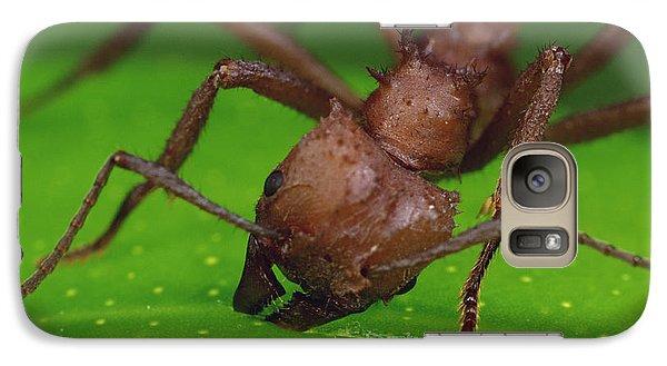 Leafcutter Ant Cutting Papaya Leaf Galaxy S7 Case by Mark Moffett