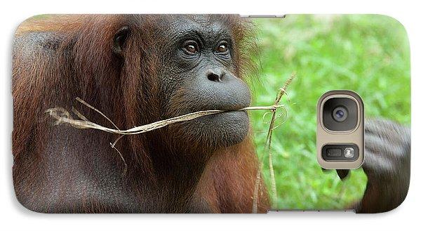 Malaysia, Borneo, Sabah, Kota Kinabalu Galaxy S7 Case by Cindy Miller Hopkins