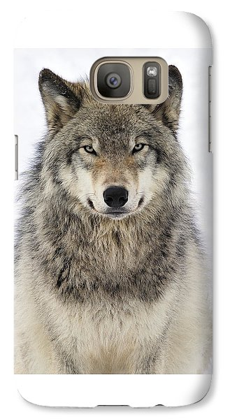 Timber Wolf Portrait Galaxy S7 Case by Tony Beck