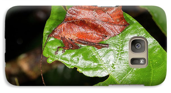 Leaf Mimic Katydid Galaxy S7 Case by Dr Morley Read