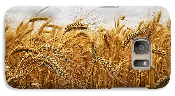Wheat Galaxy Case by Elena Elisseeva
