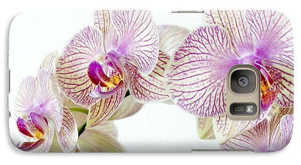 Phalaenopsis Orchid Phalaenopsis Sp Galaxy S7 Case by Lawrence Lawry