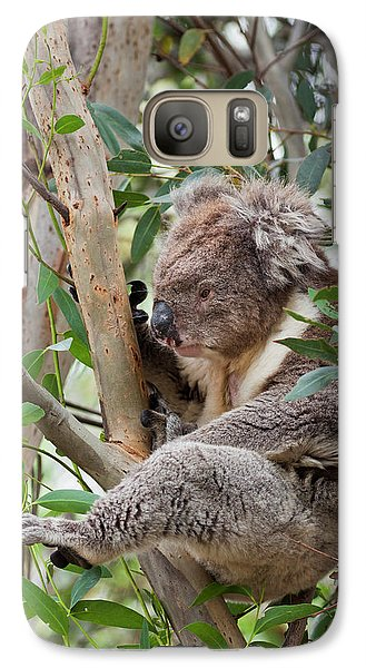 Koala (phascolarctos Cinereus Galaxy S7 Case by Martin Zwick