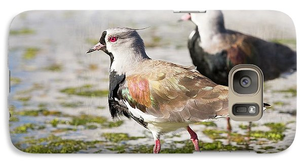 A Flock Of Southern Lapwings Galaxy Case by Ashley Cooper
