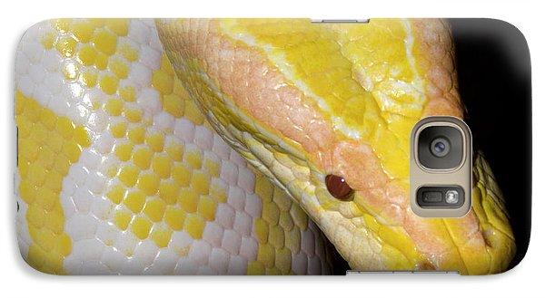Albino Burmese Python Galaxy S7 Case by Nigel Downer