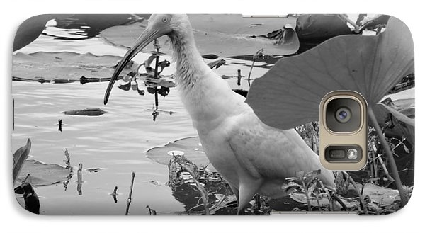 American White Ibis Black And White Galaxy Case by Dan Sproul
