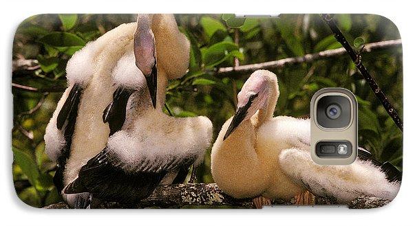 Anhinga Chicks Galaxy S7 Case by Ron Sanford