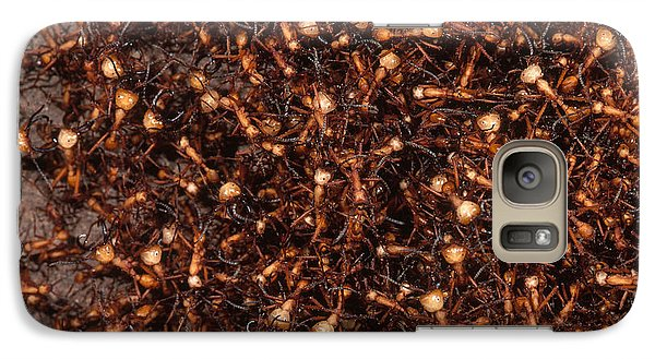 Army Ants Galaxy Case by Art Wolfe