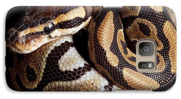 Ball Python Python Regius Galaxy S7 Case by David Kenny