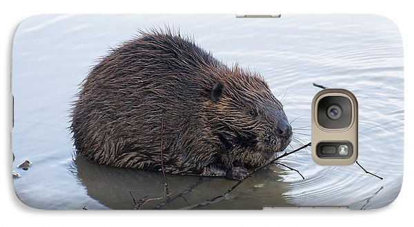 Beaver Chewing On Twig Galaxy Case by Chris Flees