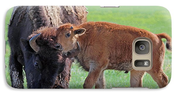 Galaxy Case featuring the photograph Bison With Young Calf by Bill Gabbert