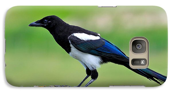 Black Billed Magpie Galaxy S7 Case by Karon Melillo DeVega