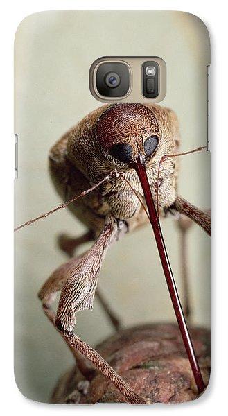 Black Oak Acorn Weevil Boring Into Acorn Galaxy Case by Mark Moffett