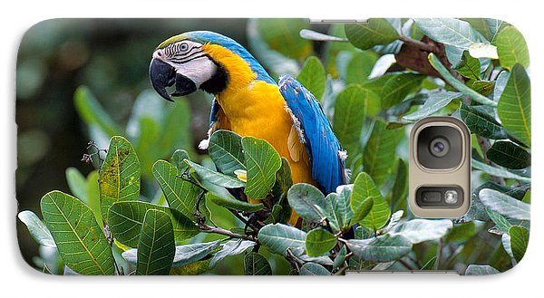 Blue And Yellow Macaw Galaxy S7 Case by Art Wolfe