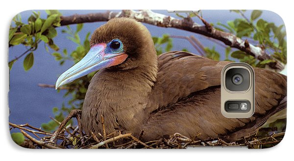Brown Color Morph Of Red-footed Booby Galaxy Case by Thomas Wiewandt