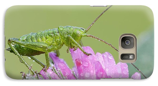Bush Cricket Galaxy S7 Case by Heath Mcdonald