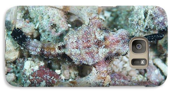 Camouflaged Pegasus Sea Moth Galaxy S7 Case by Scubazoo