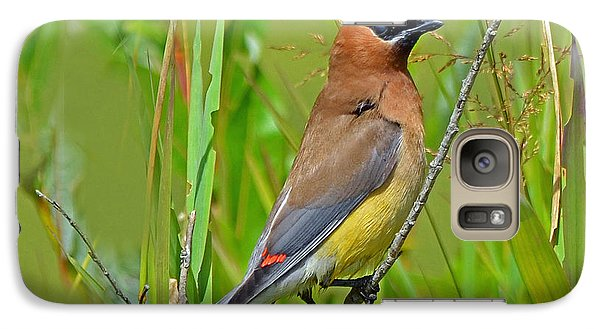 Galaxy Case featuring the photograph Cedar Waxwing by Rodney Campbell