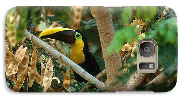 Chestnut-mandibled Toucan Galaxy S7 Case by Art Wolfe