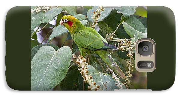 Chiriqui Conure 2 Galaxy S7 Case by Heiko Koehrer-Wagner