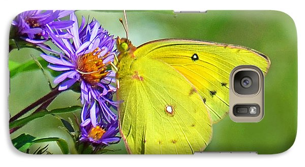 Galaxy Case featuring the photograph Clouded Sulphur by Rodney Campbell