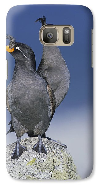 Crested Auklet Pair Galaxy Case by Toshiji Fukuda