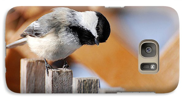 Curious Chickadee Galaxy Case by Christina Rollo