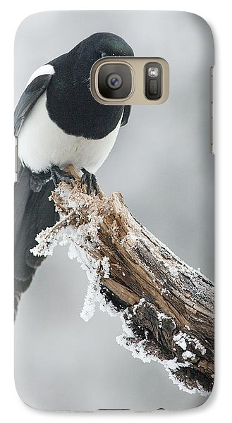 Frosted Magpie Galaxy S7 Case by Tim Grams