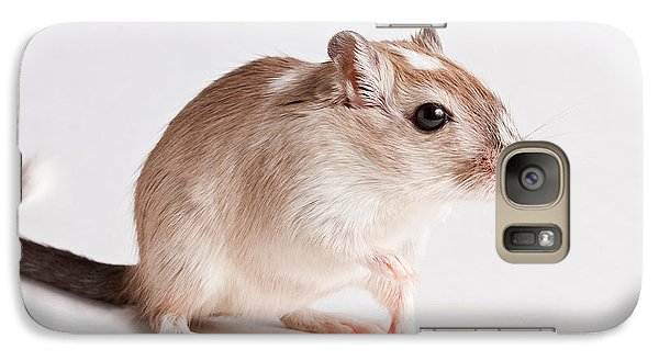 Galaxy Case featuring the photograph Gerbil Gerbillinae by David Kenny