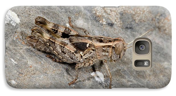 Grasshopper Calliptamus Barbarus Juvenile Galaxy S7 Case by Nigel Downer