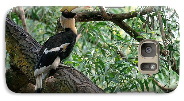 Great Indian Hornbill Galaxy S7 Case by Art Wolfe