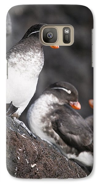Group Of Parakeet Auklets, St. Paul Galaxy S7 Case by John Gibbens