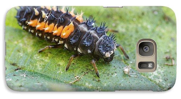 Harlequin Ladybird Larva Galaxy S7 Case by Heath Mcdonald