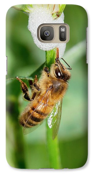 Honey Bee Drinking From Cuckoo-spit Galaxy Case by Dr. John Brackenbury