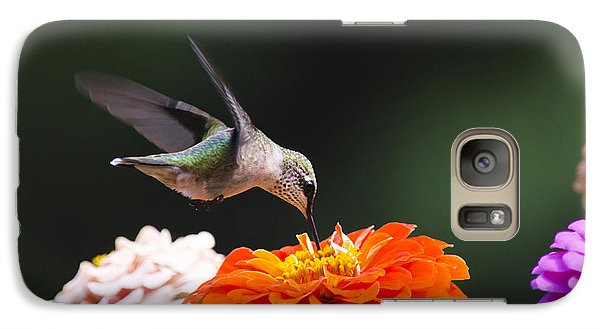Hummingbird In Flight With Orange Zinnia Flower Galaxy S7 Case by Christina Rollo