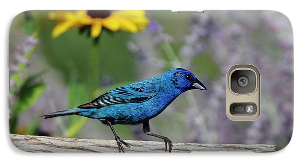 Indigo Bunting (passerina Cyanea Galaxy S7 Case by Richard and Susan Day