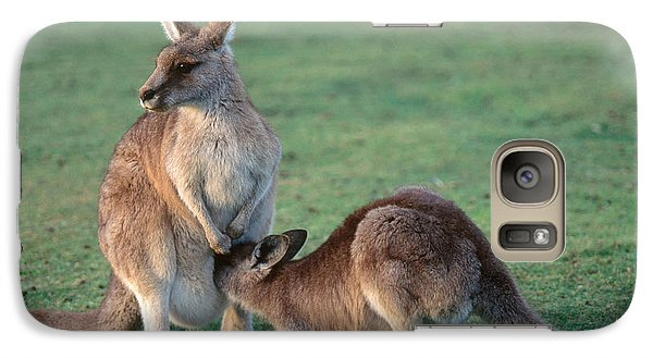 Kangaroo With Joey Galaxy Case by Gregory G. Dimijian, M.D.